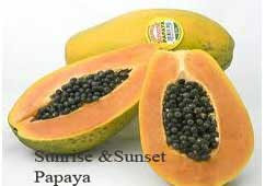 sunrise and sunset papaya