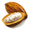 Cacao-Tropical-fruit
