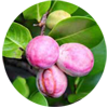 coco-Plum-Tropical-fruit