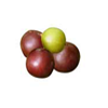 governor's-Plum-tropical-fruit