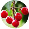 acerola-tropical-fruit