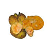lakoocha-tropical-fruit