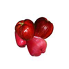malay-apple-tropical-fruit