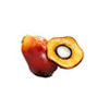 oil-palm-tropical-fruit