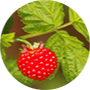 salmonberry-tropical-fruit