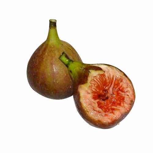 cluster fig  nutrition factscluster fig  health benefits, Beautiful flower