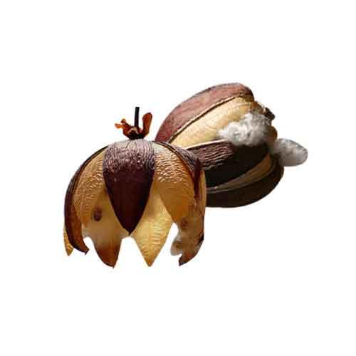 Kapok Fruit 1