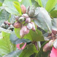 tropical-almond-3