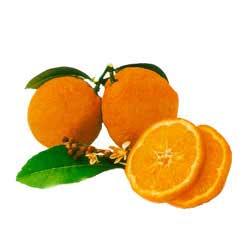 rangpur fruit lime, rangpur lime juice, citrus fruit ...