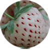 pineberry fruit