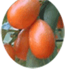 rangpur fruit